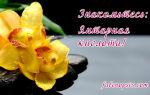 Правила использования янтарной кислоты для орхидей