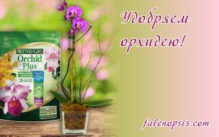 Как правильно использовать удобрения для орхидей