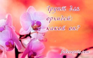 Грунт для орхидей — делаем правильный субстрат