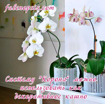 Система Корона для орхидеи фаленопсис
