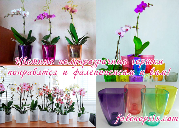 Цветные горшки для орхидей