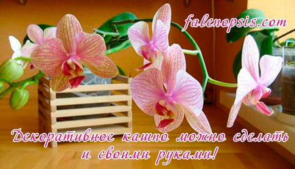 Горшок для орхидеи фалнопсис своими руками