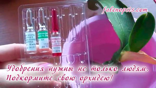 Витаминный коктейль для корней орхидей