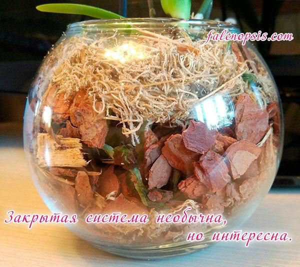 Грунт для орхидей в закрытой системе